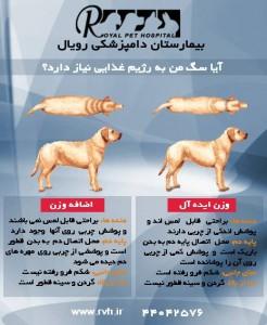 رژیم غذایی سگ - بیمارستان دامپزشکی شبانه روزی رویال | Dog Diet - Royal Vet Hospital