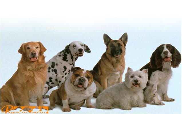 Royal Vet Hospital - Dogs