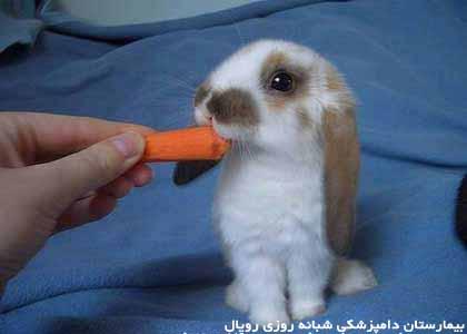hand-rabbit