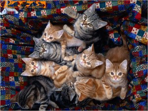گربه ها - بیمارستان دامپزشکی شبانه روزی رویال | Cats - Royal Vet Hospital