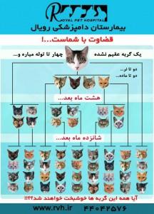 تولید مثل گربه - بیمارستان دامپزشکی شبانه روزی رویال | Cat Breeding - Royal Vet Hospital