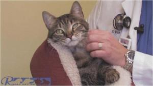 انتخاب گربه سالم - بیمارستان دامپزشکی شبانه روزی رویال | Healthy cat - Royal Vet Hospital