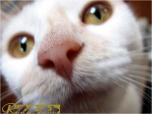 تنفس گربه |- بیمارستان دامپزشکی شبانه روزی رویال | Cat Breathing - Royal Vet Hospital