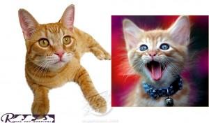 سلامت گوش گربه   - بیمارستان دامپزشکی شبانه روزی رویال   Cat Ears - Royal Vet Hospital
