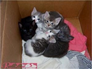 توله گربه - بیمارستان دامپزشکی شبانه روزی رویال | Kitten - Royal Vet Hospital