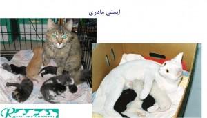 ایمنی مادری در گربه - بیمارستان دامپزشکی شبانه روزی رویال | Cat Mother Safety - Royal Vet Hospital