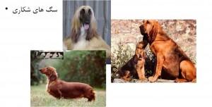 سگ های شکاری - بیمارستان دامپزشکی شبانه روزی رویال | Hunter Dog Breed - Royal Vet Hospital