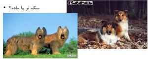 سگ نر یا ماده - بیمارستان دامپزشکی شبانه روزی رویال | Male or Female Dog - Royal Vet Hospital