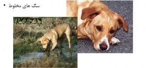 سگ های مخلوط - بیمارستان دامپزشکی شبانه روزی رویال | Mixed Dog Breed - Royal Vet Hospital