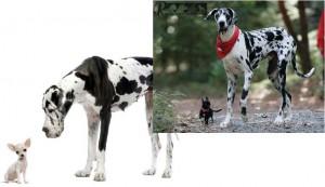 انتخاب نژاد مناسب سگ - بیمارستان دامپزشکی شبانه روزی رویال | Dog Breed - Royal Vet Hospital