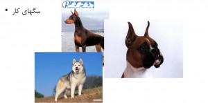 سگ های کار - بیمارستان دامپزشکی شبانه روزی رویال | woking Dog Breed - Royal Vet Hospital