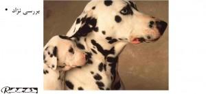 بررسی نژاد سگ - بیمارستان دامپزشکی شبانه روزی رویال | Dog Breed Checking - Royal Vet Hospital