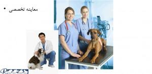 معاینه تخصصی سگ - بیمارستان دامپزشکی شبانه روزی رویال | Dog Checkup - Royal Vet Hospital