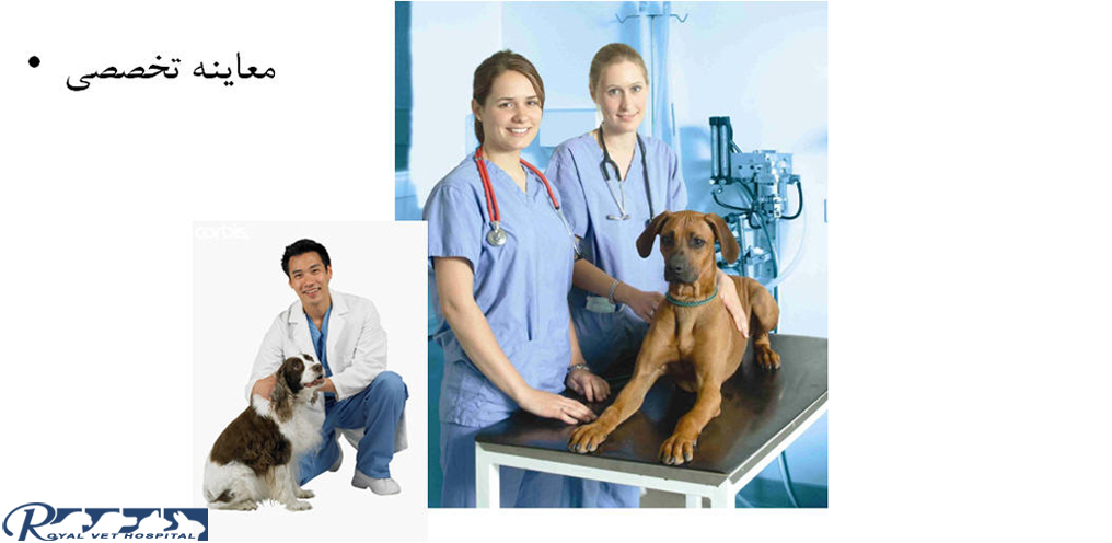 Royal Vet Hospital-Dog-Checkup