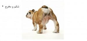 بررسی مخرج سگ - بیمارستان دامپزشکی شبانه روزی رویال | Dog Rectum Checking - Royal Vet Hospital