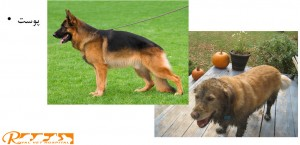 بررسی پوست سگ - بیمارستان دامپزشکی شبانه روزی رویال   Dog Skin Checking- Royal Vet Hospital