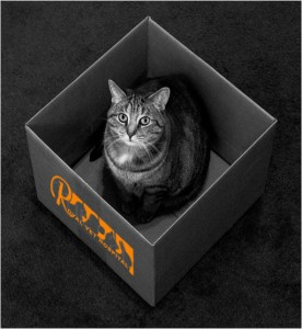 گربه- بیمارستان دامپزشکی شبانه روزی رویال | Cat - Royal Vet Hospital