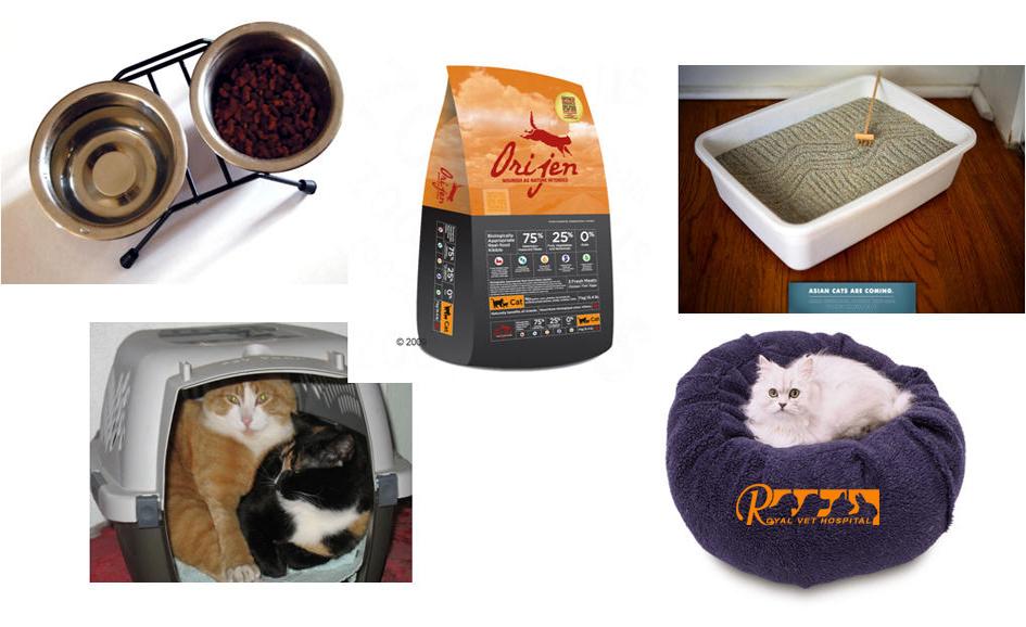وسایل مورد نیاز گربه - بیمارستان دامپزشکی شبانه روزی رویال | Cat Accessories - Royal Vet Hospital