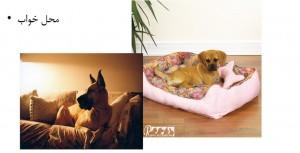 محل خواب - بیمارستان دامپزشکی رویال   Royal Vet Hospital - Dog Bed