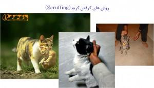 گرفتن گربه - بیمارستان دامپزشکی شبانه روزی رویال | Scruffing Cat - Royal Vet Hospital