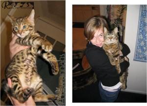 گرفتن و نگهداشتن گربه - بیمارستان دامپزشکی شبانه روزی رویال | Hold Cat - Royal Vet Hospital