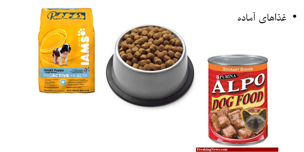 RVH-Dog_Food
