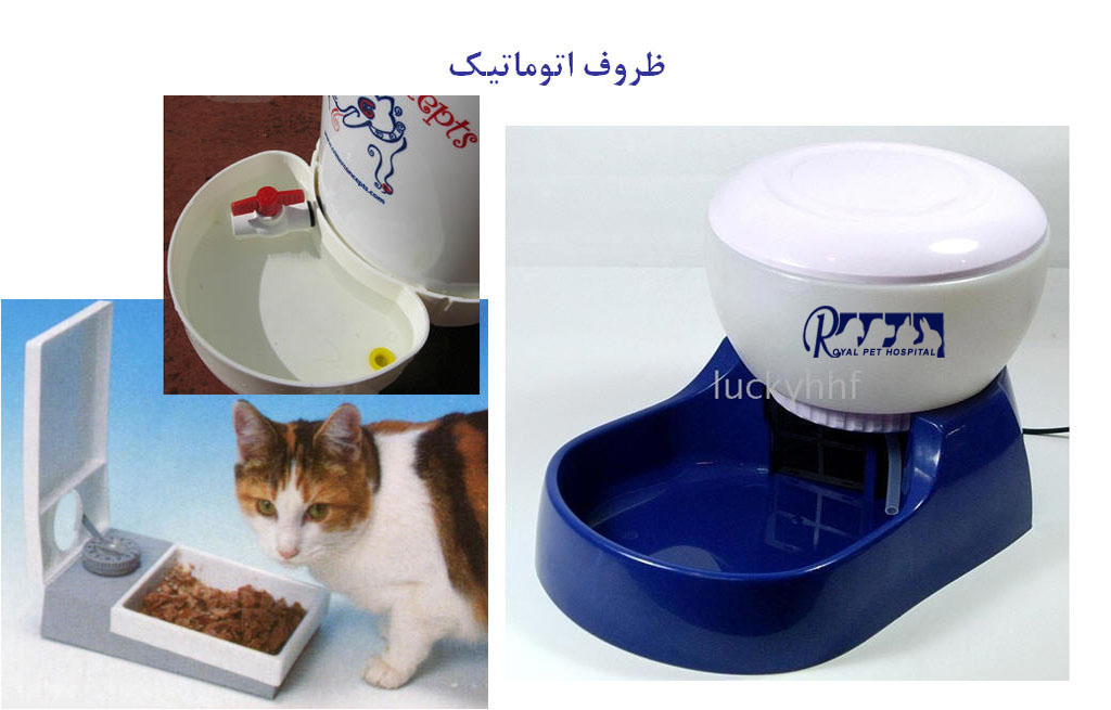 Royal-Pet-Hospital-Cat Auto Dish