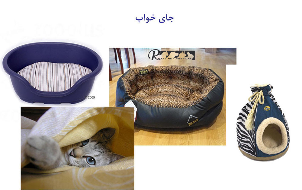 Royal-Pet-Hospital-Cat Bed Place