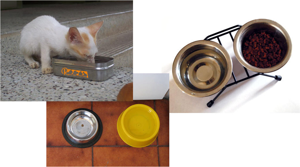 Royal-Pet-Hospital-Cat Dish