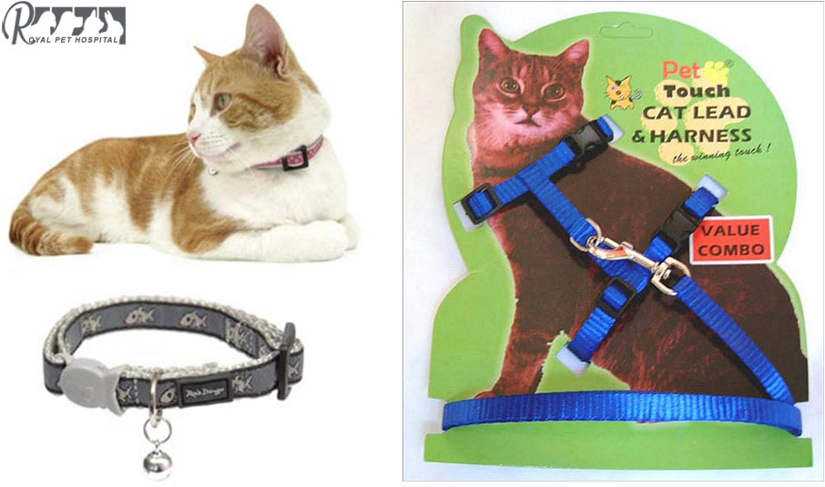 Royal Pet Hospital-Cat Collar&Lead