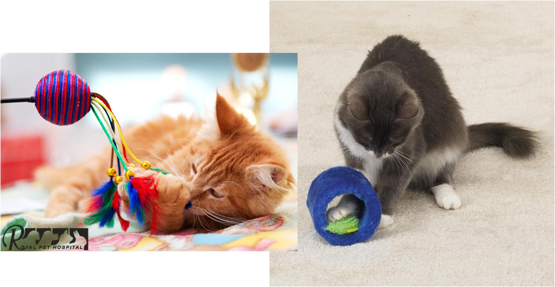 Royal_Pet_Hospital-Cat-Toy_1