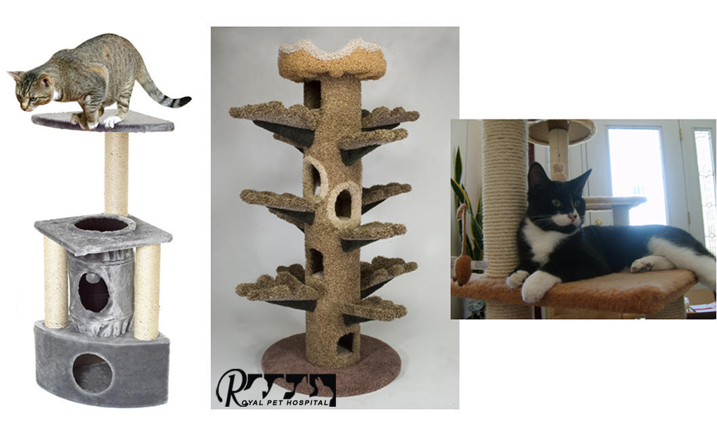 Royal_Pet_Hospital-Cat-Toy_4